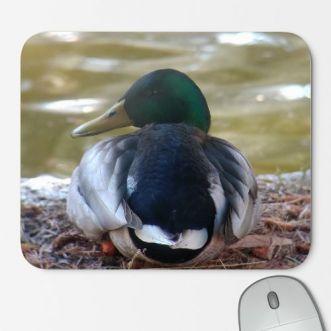 https://www.positivos.com/110523-thickbox/real-duck.jpg