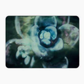 https://www.positivos.com/130991-thickbox/water-blumenauge.jpg