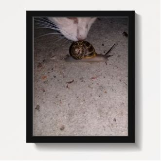 https://www.positivos.com/132354-thickbox/gato-y-caracol.jpg